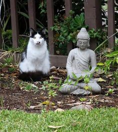 16 Cats Who Fell In Love With Local Statues - World's largest collection of cat memes and other animals Cool Cats, I Love Cats, Crazy Cats, Animals And Pets, Funny Animals, Cute Animals, Cute Kittens, Cats And Kittens, Meditating Cat
