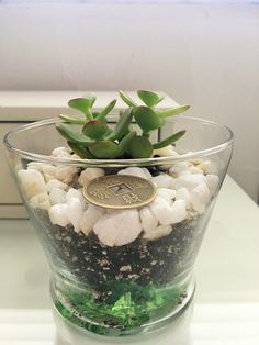 Why you need a Jade Plant at Home. Meaning and Placement - Unique Feng Shui #fengshui