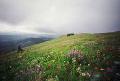 Silver Star Mountain, Washington, 2012 // ph. Danielle Hughson