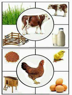 1 million+ Stunning Free Images to Use Anywhere Farm Activities, Animal Activities, Montessori Activities, Kindergarten Activities, Toddler Activities, Farm Animals Preschool, Farm Unit, Farm Crafts, Ideias Diy