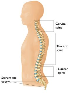 A General View And Simple Exercises For Pinched Nerve In Back. A pinched nerve in the back could happen anywhere along the sufferers' spinal column. Severe Neck Pain, Causes Of Back Pain, Upper Back Pain, Neck And Back Pain, Spinal Nerve, Spinal Cord, Pinched Nerve In Neck, Nerve Conduction Study, Diabetes Mellitus Treatment