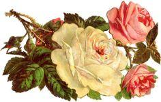 Рисунки роз