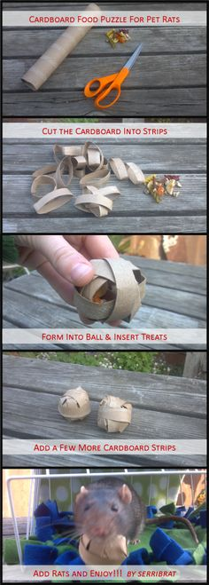 Cute DIY tutorial - food puzzle for pet rats your hamster will like these too Pet Mice, Pet Rats, Pet Rodents, Hamster Toys, Diy Rodent Toys, Diy Hamster Food, Cage Rat, Pet Rat Cages, Diy Rat Toys
