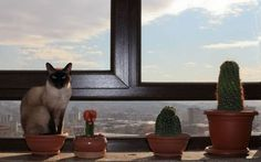 one of these cactuses is actually a cat- can you see which one?