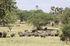 Group of Elephants, Ruaha National Park, Tanzania