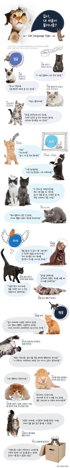 """""""내 마음이 들리냐옹?"""" 몸으로 말하는 고양이 언어 [인포그래픽] #Cat / #Infographic ⓒ 비주얼다이브 무단 복사·전재·재배포 금지"""