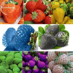 نتیجه تصویری برای types of. Strawberry