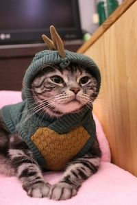 """I don't know what an """"eragon"""" is.. But this cat makes me happy"""