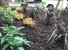 Plants selected to look good with minimal effort Low Maintenance Plants, Bespoke Design, Planting, Effort, Garden Design, Minimal, Landscape, Building, Flowers