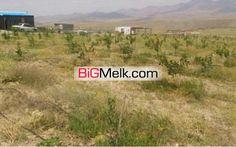 باغ پسته  عالی در آذربایجان شرقی