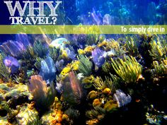 Why Travel? To simply dive in. What's your why? #Belize #coral #underwater #reef #snorkel #travel #WhyTravel