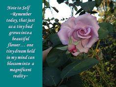 I just love beautiful roses!  http://www.facebook.com/gteggelove
