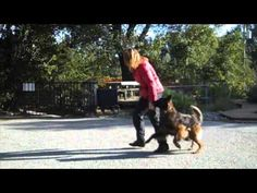 Fenzi Dog Sports Academy - OB300: Heeling Games