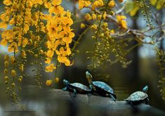 Three Enjoying Tree(Little turtles,Sun and flowers) - ~_____________________~ Funny& cute little things...I smiled.........! lol