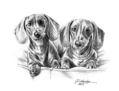 The Two Doxies, hand drawn portrait done by artist Genevieve Schlueter. She takes you photos & turns them into highly detailed lifelike keepsake portraits. Makes a great gift idea for any pet lover. Dog Lover Gifts, Dog Gifts, Dog Lovers, Animal Drawings, Art Drawings, Portrait Sketches, Art Sketches, Hand Sketch, Studios
