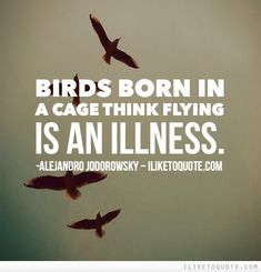 Birds born in a cage think flying is an illness. #truth #sayings #quotes