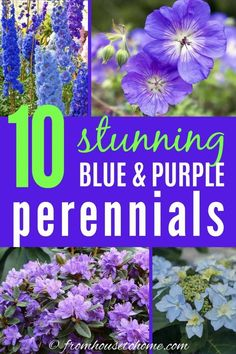 I love these perennials with purple and blue flowers that grow well in part shade. They will look beautiful in my garden landscaping. Part Shade Perennials, Purple Perennials, Spring Perennials, Purple Perrenial Flowers, Garden Bulbs, Planting Bulbs, Garden Plants, Fruit Garden, Flower Gardening