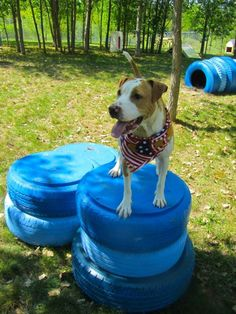 This animal rescue business took a DIY approach when they painted some old tires blue to give their dogs tunnels to crawl through and perches to climb. They adore it!