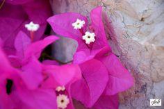 seyir fotoları/çeşme/pembe çiçek