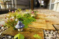レンガの小道に咲いた花とキノコ