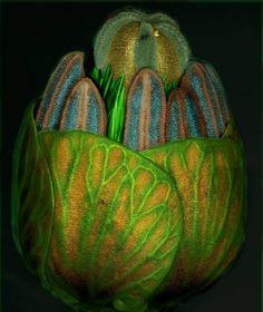 emerging bud seen through a microscope