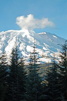A steaming Mount St Helens 50 miles NW of Vancouver, Washington