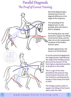 #Dressage Parallel Diagonals are the proof of correct training and movement