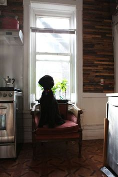 Reclaimed wood wall juxtaposed by the stainless appliances. Even the dog loves it.