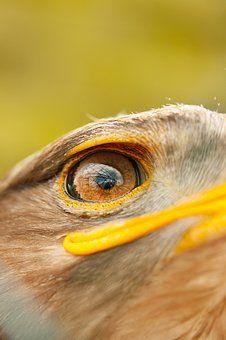 'Adler' ein Foto von 'birdy`s'
