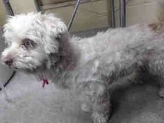 Animal ID: A4716625  More Sharing ServicesShare on facebookShare on twitterShare on mailto  I don't have a name yet and I'm an approximately 3 year old female poodle min.  I am not yet spayed.  I have been at the Downey Animal Care Center since June 2, 2014.  I will be available on June 6, 2014.  You can visit me at my temporary home at D521.