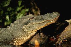 Scienza: #Florida #morto il #bambino attaccato dall'alligatore (link: http://ift.tt/264S5Ta )