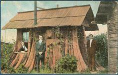 Cedar stump house, near Edgecomb, Washington
