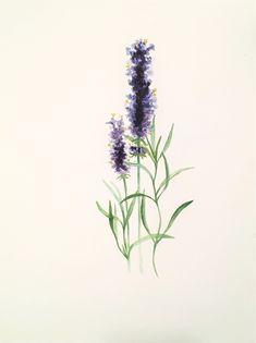 Pencil Drawings, Painting & Drawing, Paintings, Plants, Paint, Painting Art, Plant, Painting, Painted Canvas