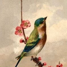 Bird Picture with Blossoms Free Bird Picture with Blossoms - graphics fairy has beautiful images FREE!Free Bird Picture with Blossoms - graphics fairy has beautiful images FREE! Graphics Fairy, Free Graphics, Vector Graphics, Vogel Clipart, Bird Clipart, Bird Pictures, Vintage Pictures, Vintage Images, Free Pictures