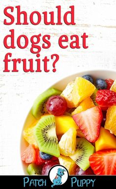 Sometimes it's fun to make a healthy, homemade dog treat for your dog insetead of buying treats. Here are 16 healthy dog treat recipes you can make at home. Homemade Dog Treats, Healthy Dog Treats, Dog Treat Recipes, Dog Food Recipes, Trimming Dog Nails, Hypoallergenic Dog Food, Dog Diet, Eat Fruit, Dog Eating