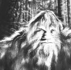 Cryptozoology, Bigfoot, Wilderness, Mystery, Creatures, Animals, Instagram, Art, Art Background
