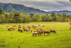 Cades Cove: The best place to explore the Smoky Mountains