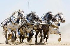 A Four-Horse Team of Beautiful Draft Horses.