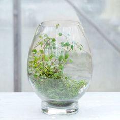 Terrain Open Drop Terrarium #shopterrain    planted with Angel Vine