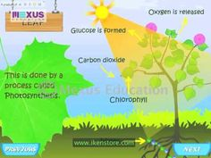 Plants are the important part of our environm Enjoy learning biology, one of the important Section of Science.            http://www.youtube.com/watch?v=DV9mcLZCg3I