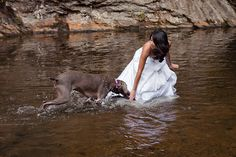 Bridal portraits with bride's dog (a Weimaraner) in a river!!!!! (photography by Carisa Chee)  @Stacey Gresham