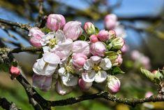 Der blütenweiße Frühling ist eine besondere Jahreszeit #imländle. Wenn ihr den Blütenzauber in vollen Zügen genießen möchtet, schaut euch den Ausflugstipp der Autorinnen Eva und Martina an. Wir wünschen euch viel Spaß beim Lesen und im besten Fall bald beim Erleben.