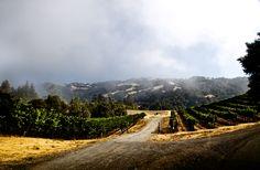 #rodneystrong #wine #sonomacounty  #fog #alexandervalley #vineyard | photo: @Kristen Newsom