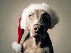 christmas dog png - Buscar con Google