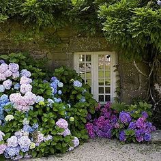 17 Dreamy Hydrangea Gardens That Are Giving Us Major Inspiration Hydrangea Tree, Climbing Hydrangea, White Hydrangea Garden, Hydrangeas, Cottage Patio, Hydrangea Landscaping, Front Yard Landscaping, Small Garden Inspiration, Gardens