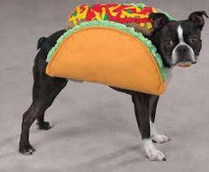 Casual Canine Taco Dog Halloween Costume S, M, L