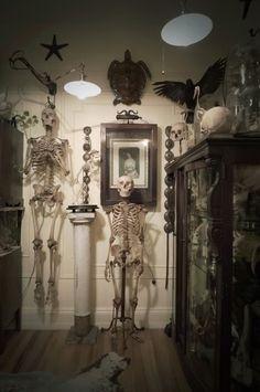 Ryan Matthew Cohn's collection - Oddities