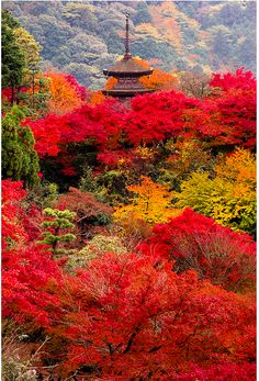 VISITED :D Autumn colors at Kiyomizu-dera Temple in Kyoto, Japan