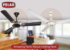 Ceiling fans are undoubtedly the most power-saving fans but some facts about them are unknown to many people. Read to know more about them. Ceiling Fans, Fun Facts, People, Decor, Ceiling Fan, Decorating, Funny Facts, Dekoration, Deco