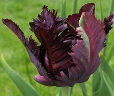 Google Image Result for http://blog.bigappleflorist.com/wp-content/uploads/2011/10/natural-black-flowers.jpg